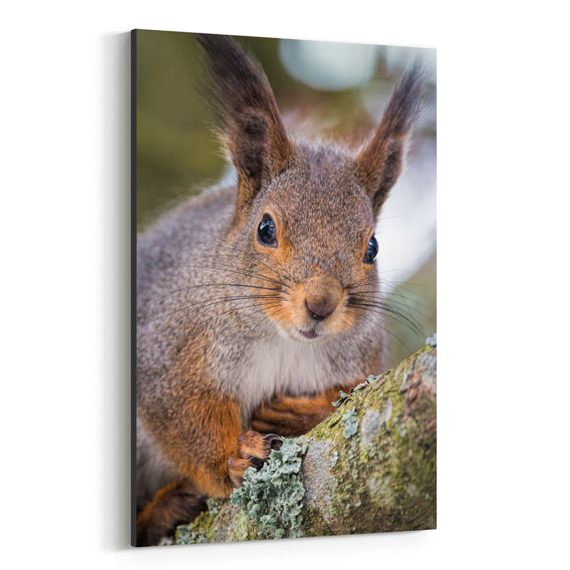 Squirrel in Tree Animal Nature Canvas Art Print