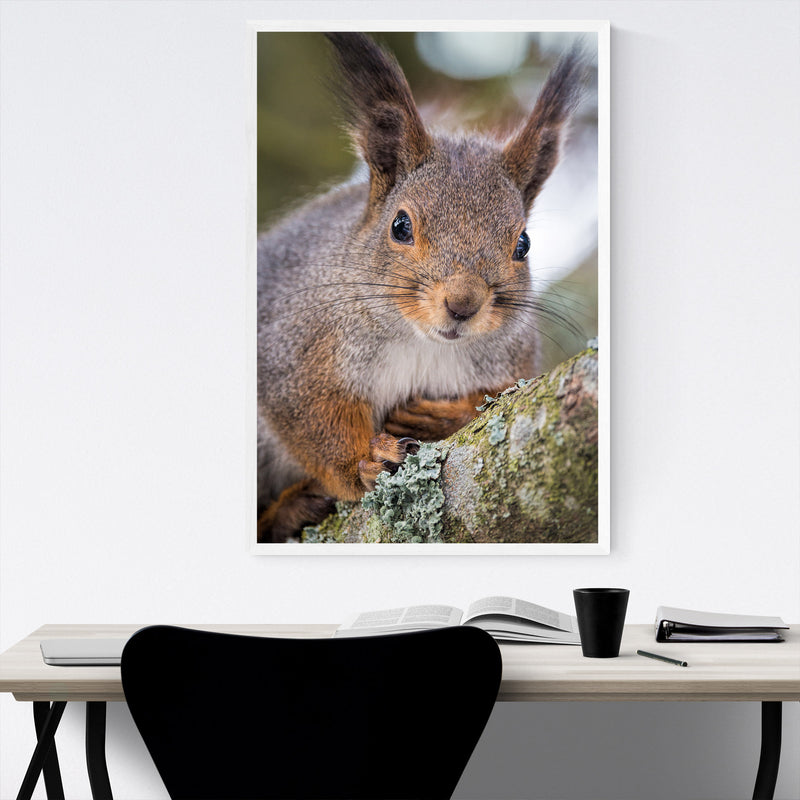 Squirrel in Tree Animal Nature Framed Art Print