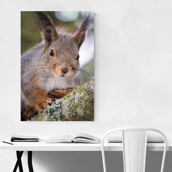Squirrel in Tree Animal Nature Art Print