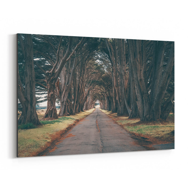 Point Reyes Cypress Tree Tunnel Canvas Art Print