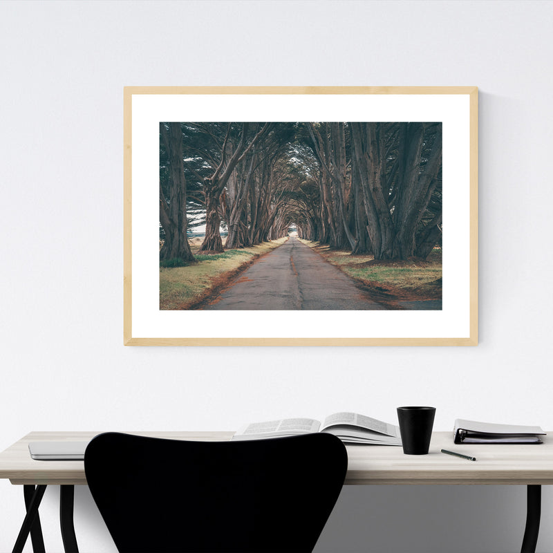 Point Reyes Cypress Tree Tunnel Framed Art Print