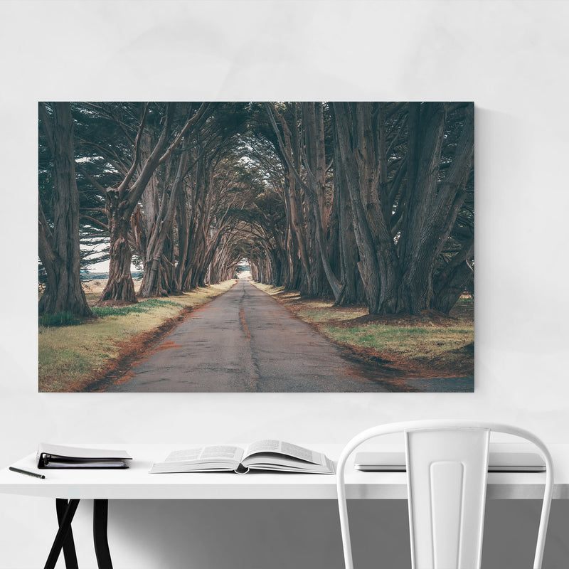 Point Reyes Cypress Tree Tunnel Art Print