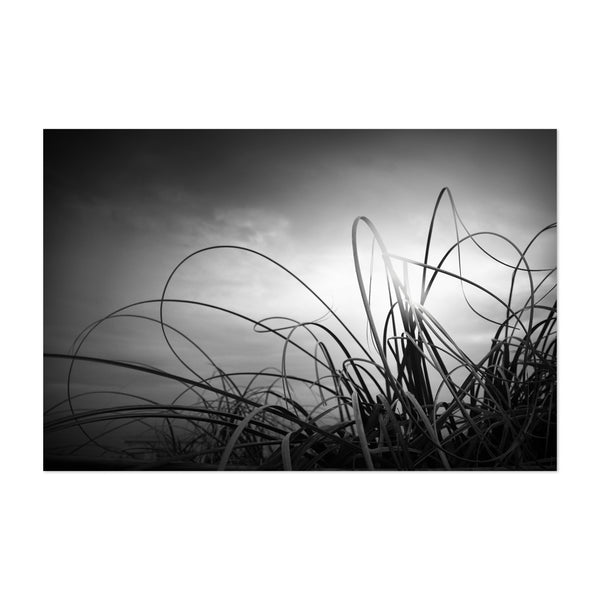 Black White Nature Photography Art Print