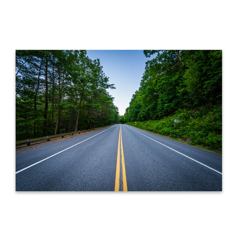 New Hampshire Forest Road Metal Art Print