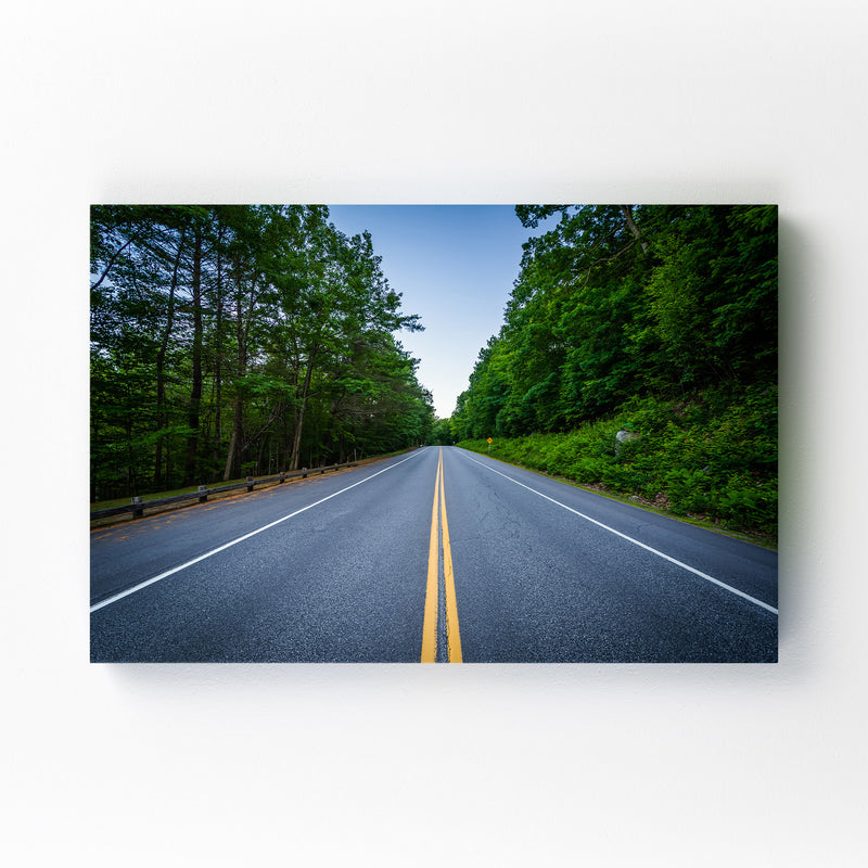 New Hampshire Forest Road Mounted Art Print