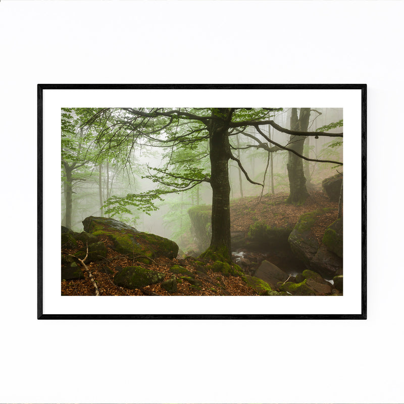 Bulgaria Forest Landscape Nature Framed Art Print