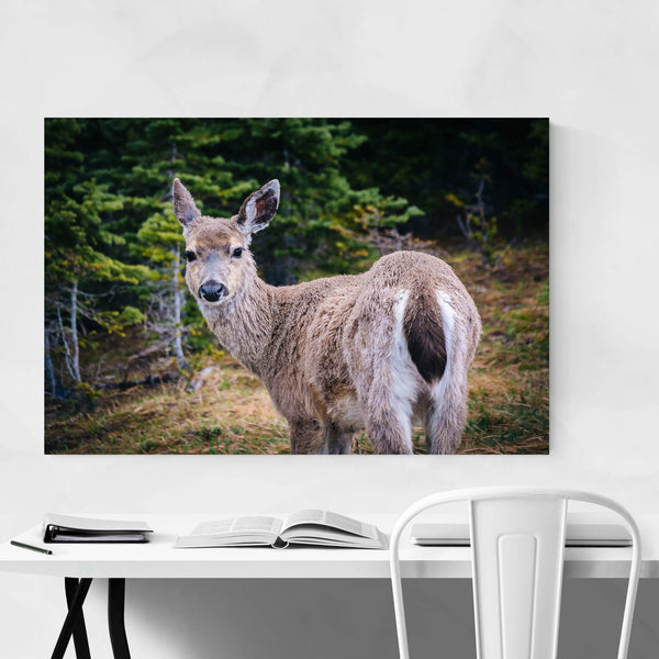 Deer Wildlife Photo Washington Art Print