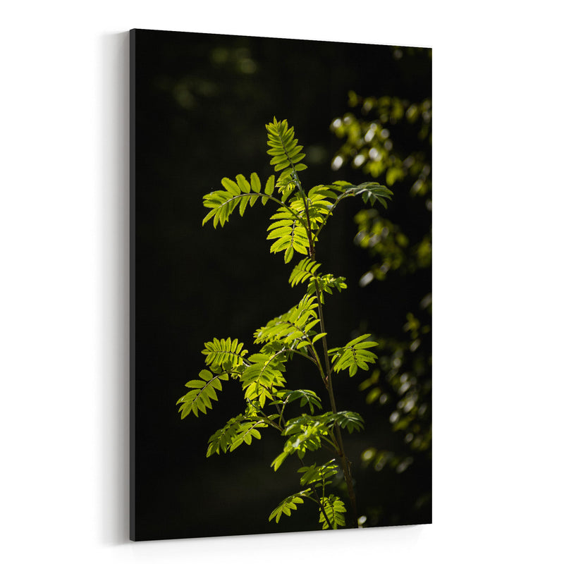 Forest Plants Lush Nature Green Canvas Art Print