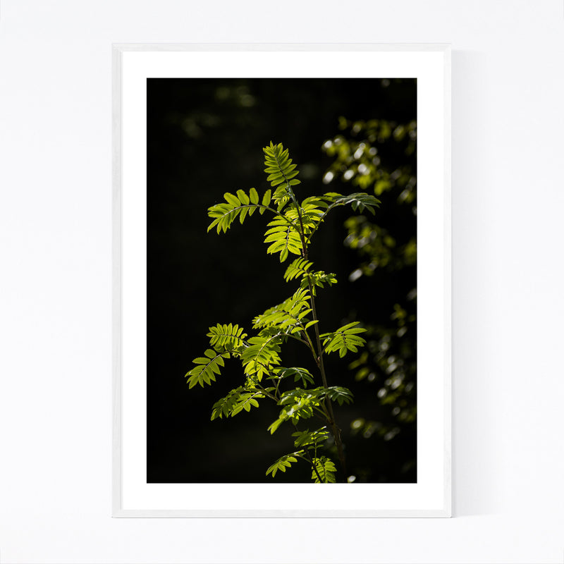 Forest Plants Lush Nature Green Framed Art Print