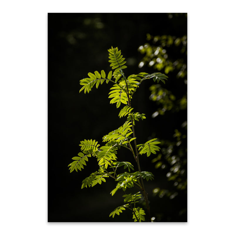 Forest Plants Lush Nature Green Metal Art Print