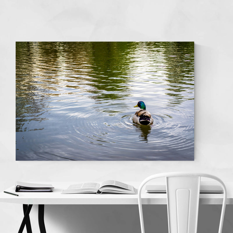Duck and Ripples in Pond Nature Metal Art Print