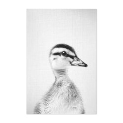 Cute Baby Duckling Peekaboo Animal Art Print