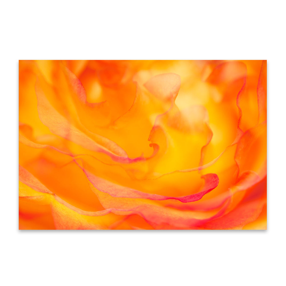 Abstract Rose Digital Art Floral Metal Art Print