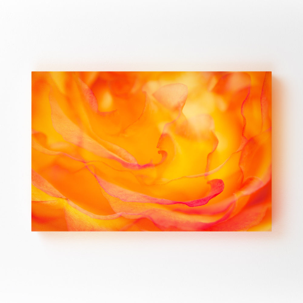 Abstract Rose Digital Art Floral Mounted Art Print
