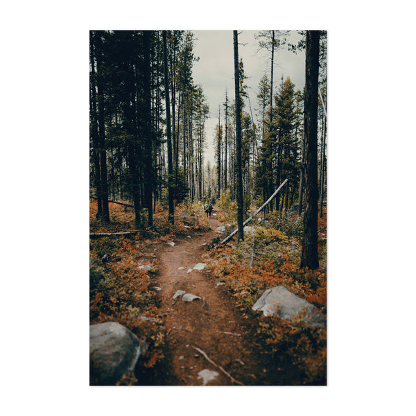 Forest Trail Landscape Idaho Art Print