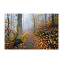 Virginia Autumn Fall Forest Path Art Print