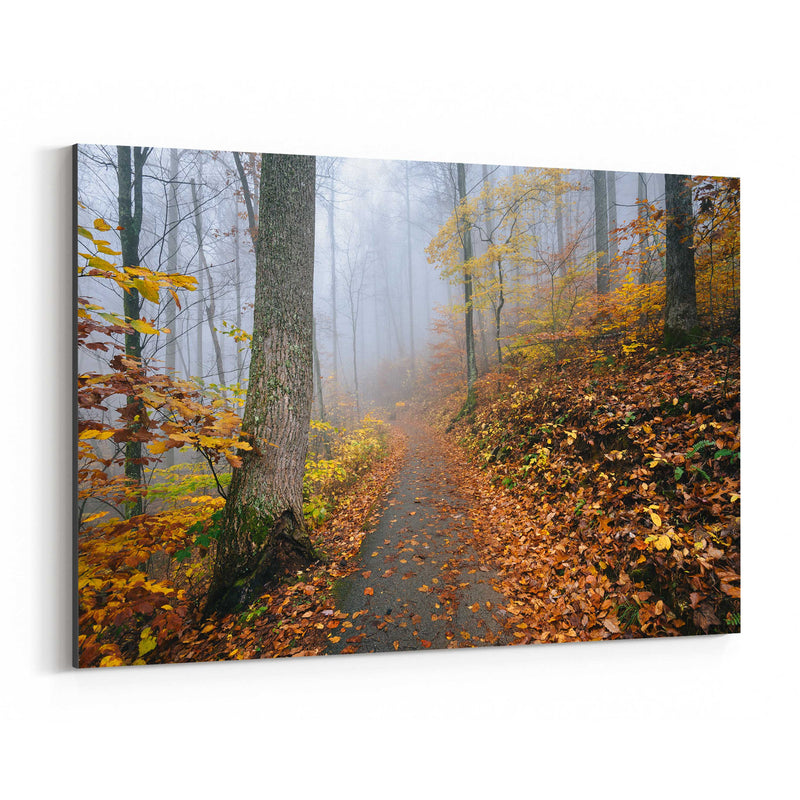 Virginia Autumn Fall Forest Path Canvas Art Print