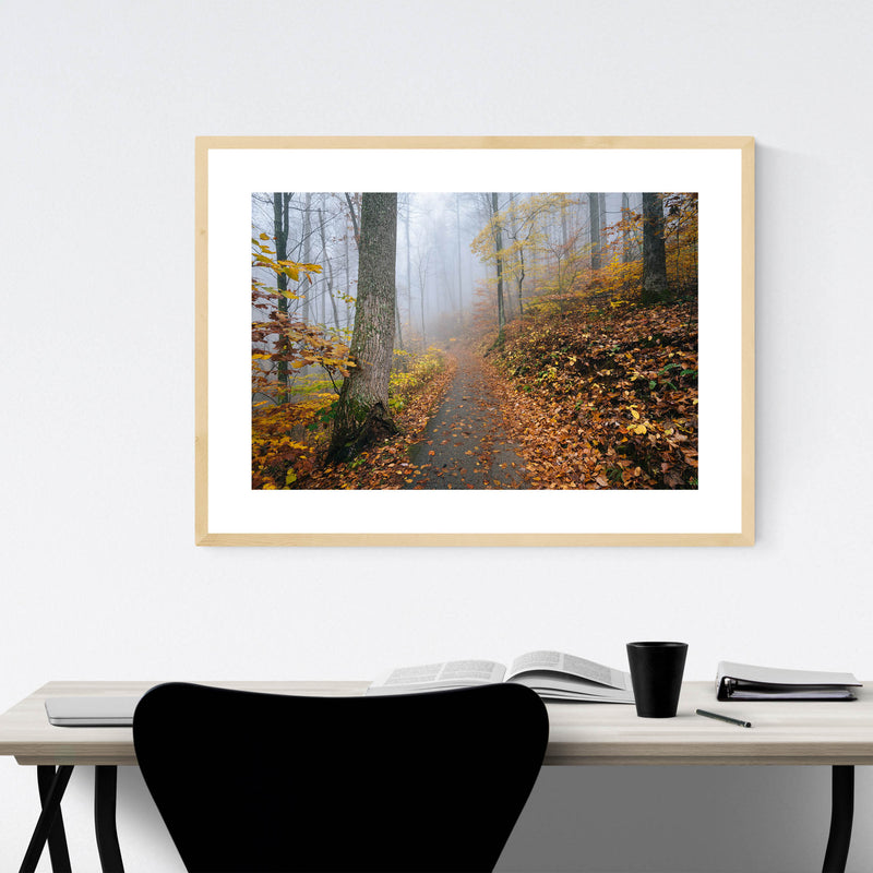 Virginia Autumn Fall Forest Path Framed Art Print