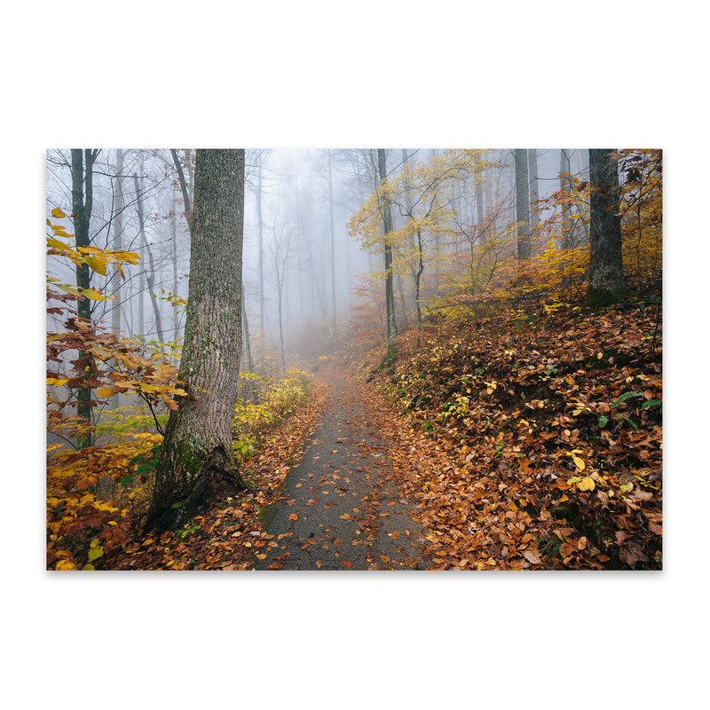 Virginia Autumn Fall Forest Path Metal Art Print