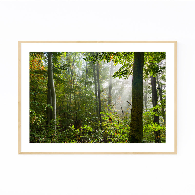 Bulgaria Autumn Forest Landscape Framed Art Print