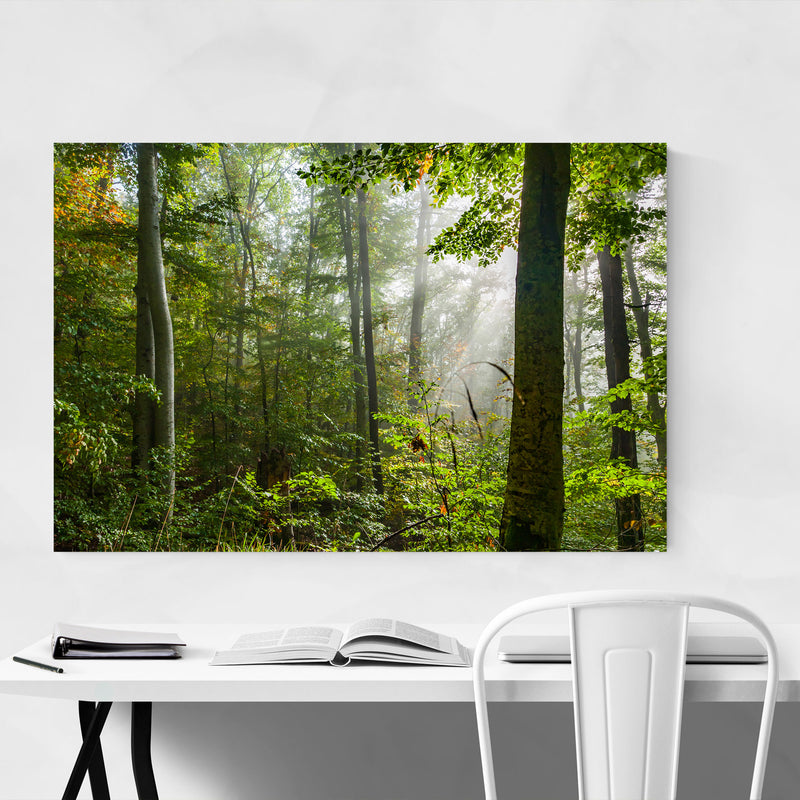 Bulgaria Autumn Forest Landscape Metal Art Print