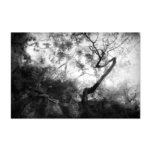 Dark Black White Nature Photo Art Print