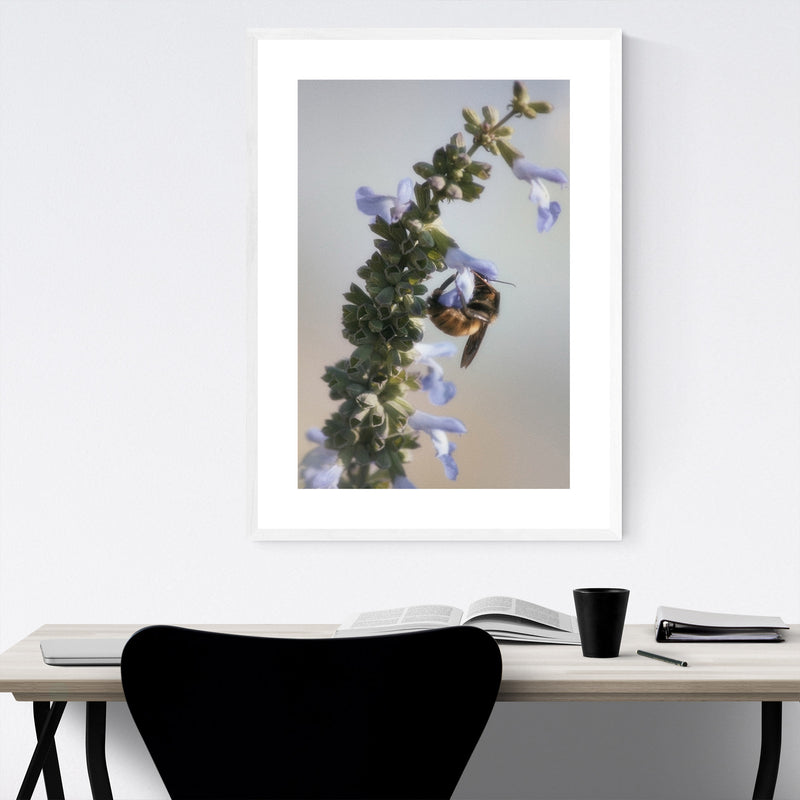 Honey Bee Nectar Animal Nature Framed Art Print