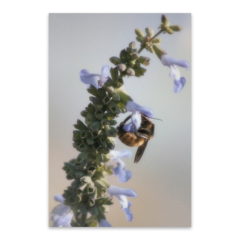 Honey Bee Nectar Animal Nature Metal Art Print