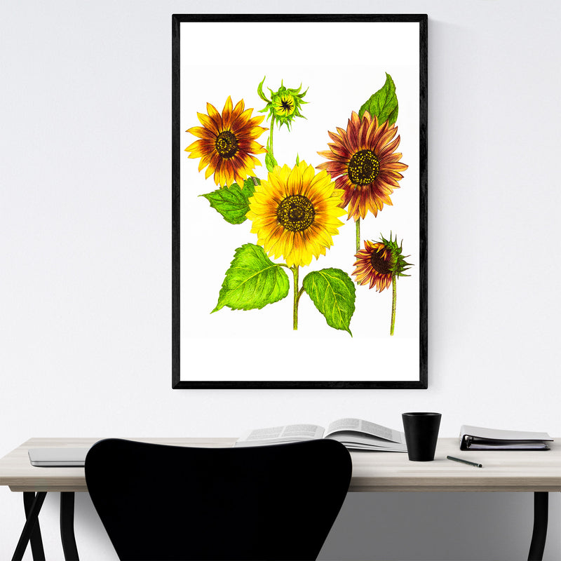 Sunflowers Floral Botanical Framed Art Print