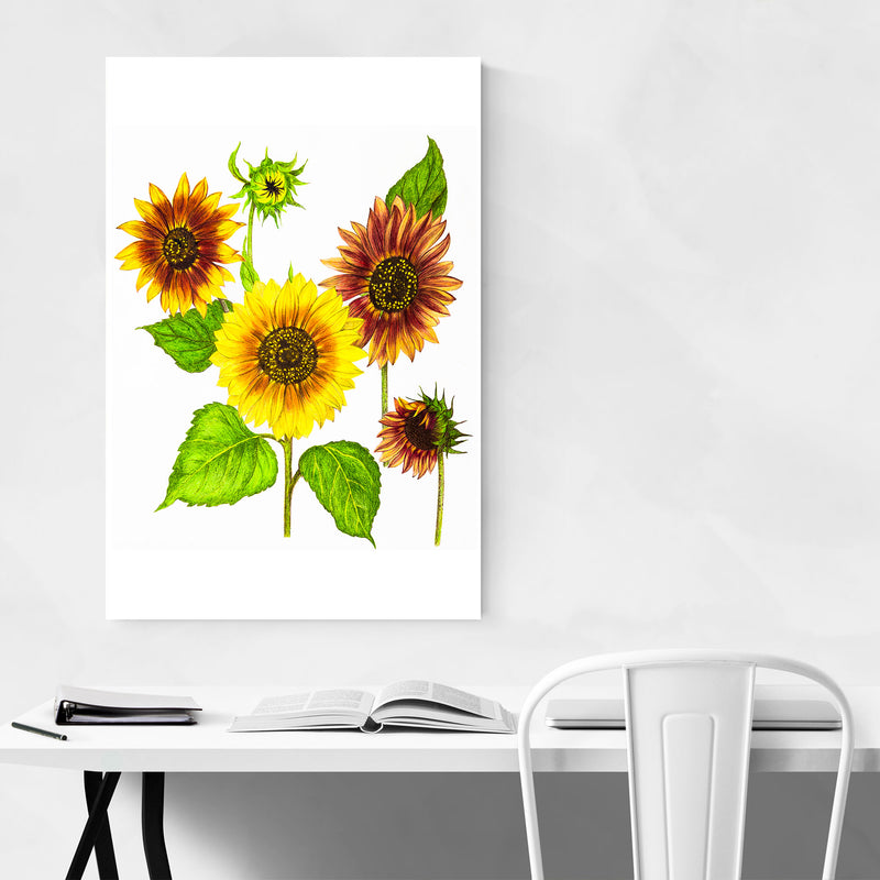 Sunflowers Floral Botanical Art Print