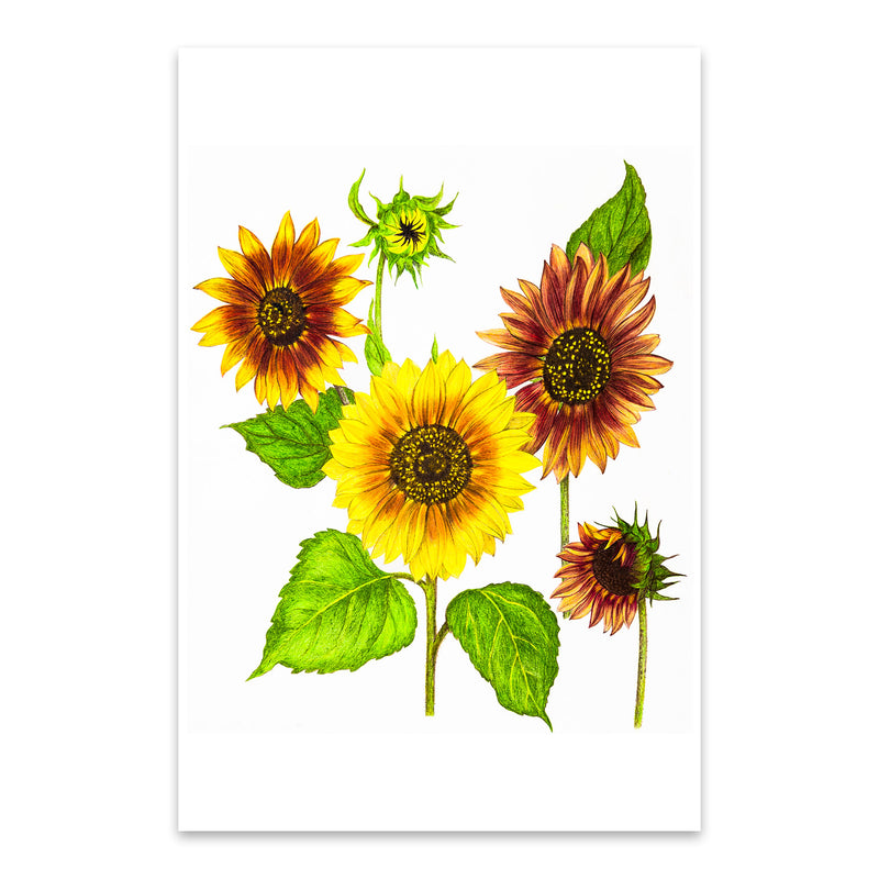Sunflowers Floral Botanical Metal Art Print