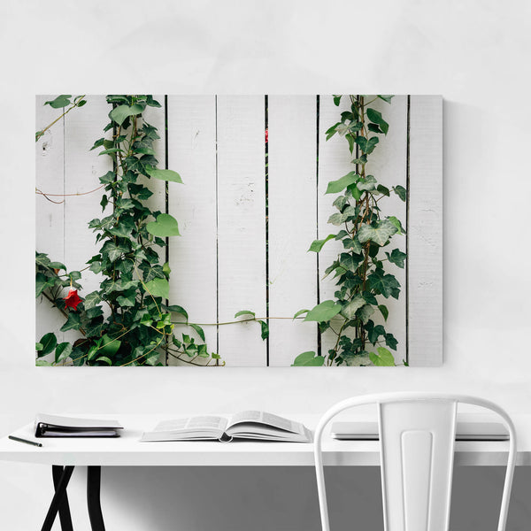 Ivy on Fence Nature Photo Art Print