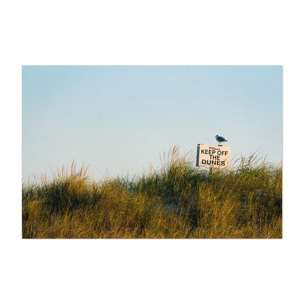 Seagull Sand Dunes Beach Sign Art Print