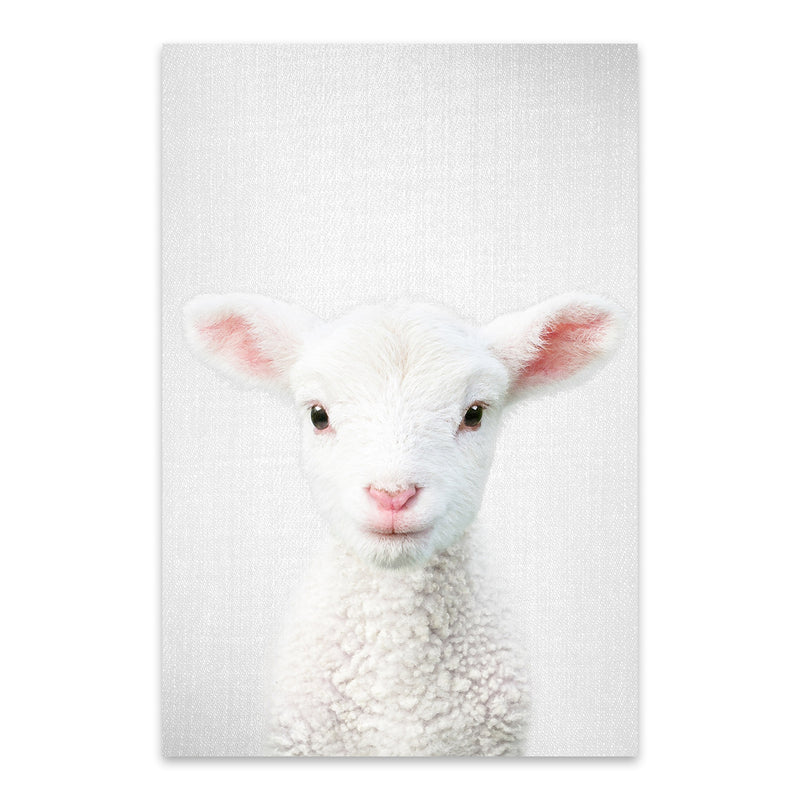 Cute Lamb Peeking Nursery Animal Metal Art Print
