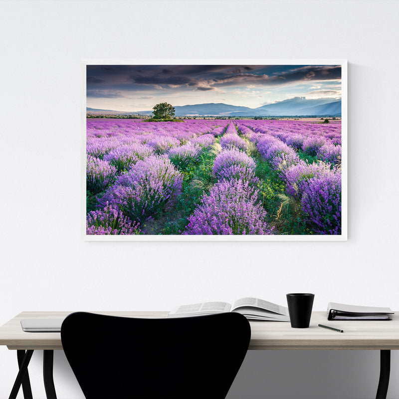 Bulgaria Lavender Field Rural Framed Art Print
