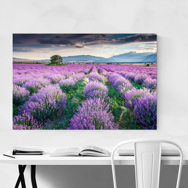 Bulgaria Lavender Field Rural Canvas Art Print