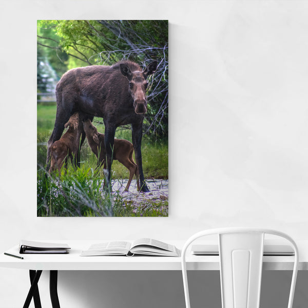 Moose Animal Wildlife Wyoming Art Print