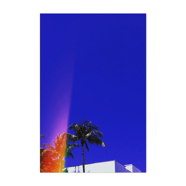 Abstract Miami Palms Photography Art Print