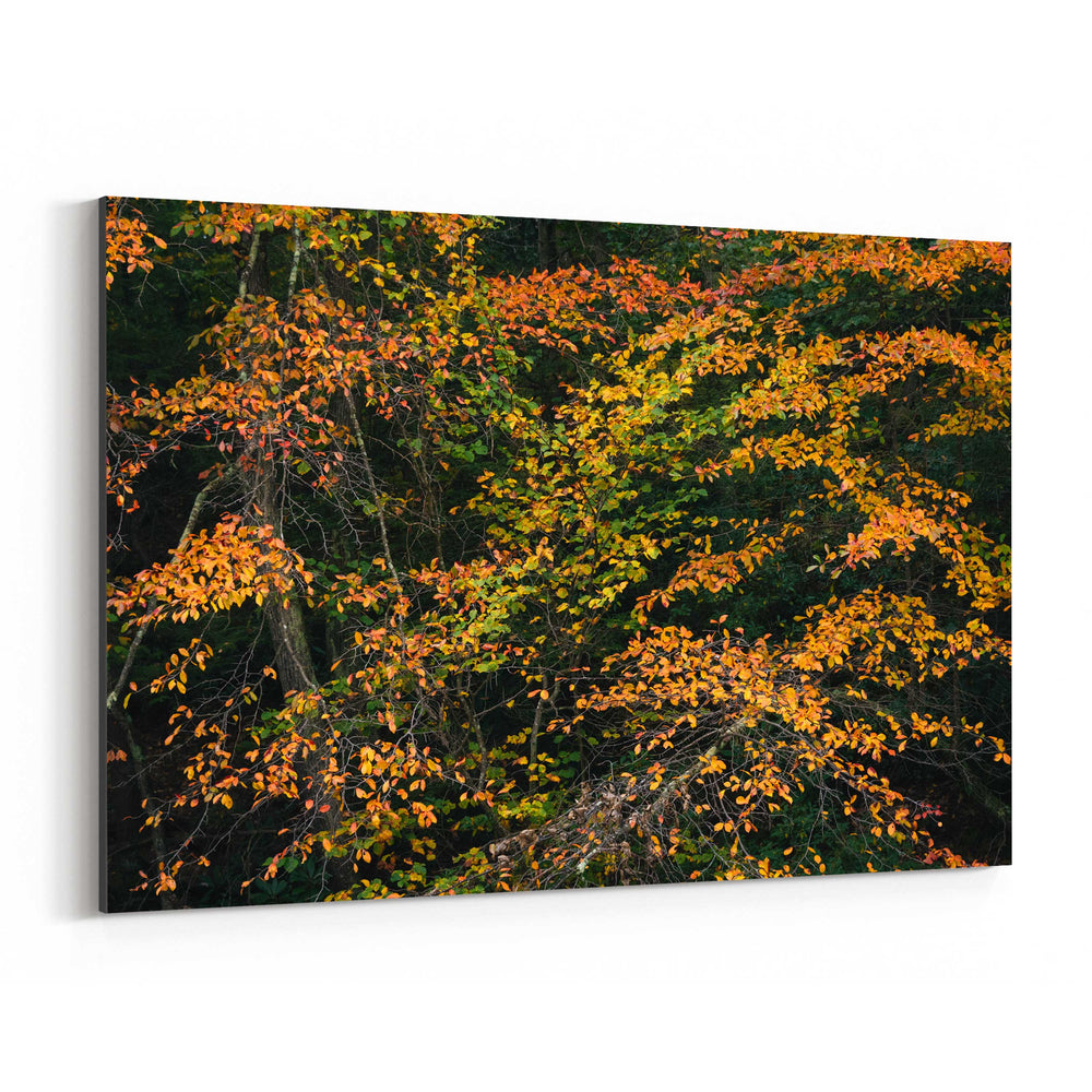 Autumn Fall Foliage Minnewaska Canvas Art Print