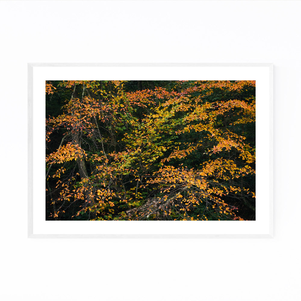 Autumn Fall Foliage Minnewaska Framed Art Print