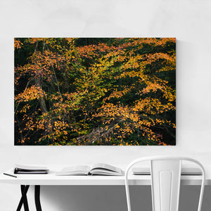 Autumn Fall Foliage Minnewaska Art Print