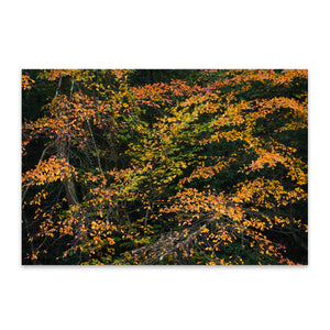 Autumn Fall Foliage Minnewaska Metal Art Print