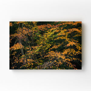 Autumn Fall Foliage Minnewaska Mounted Art Print
