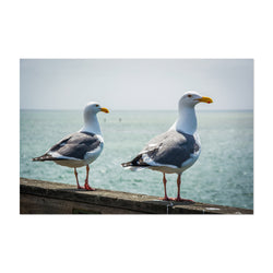 Seagulls in Capitola California Art Print