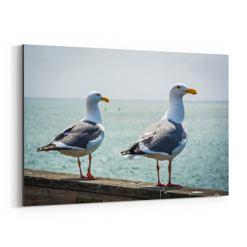 Seagulls in Capitola California Canvas Art Print