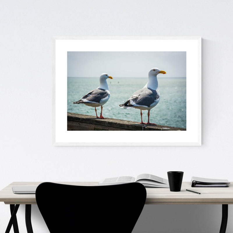 Seagulls in Capitola California Framed Art Print