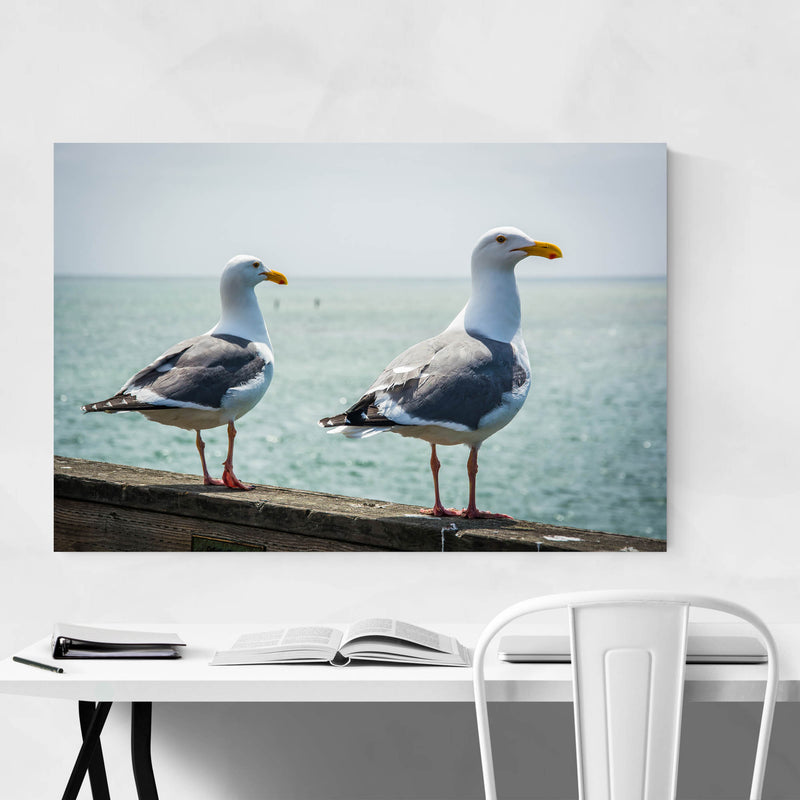 Seagulls in Capitola California Metal Art Print