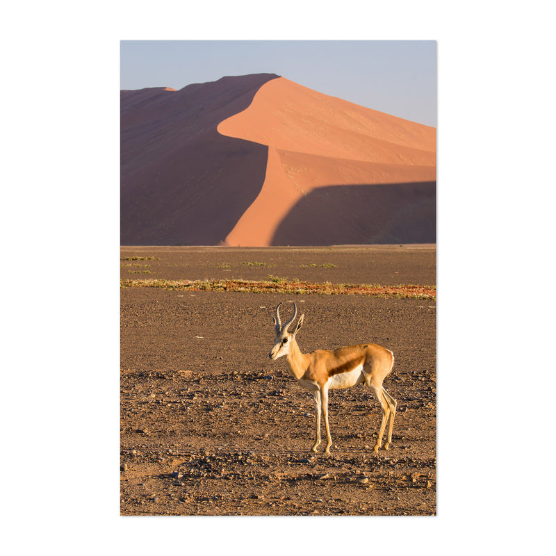 Namibia Springbok Animal Art Print