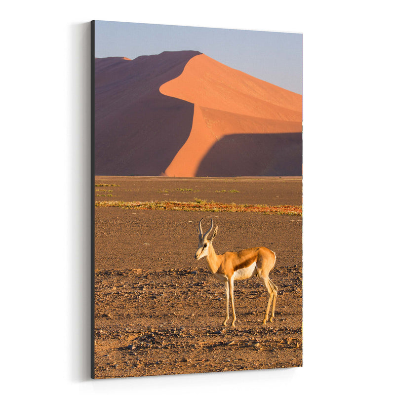 Namibia Springbok Animal Canvas Art Print