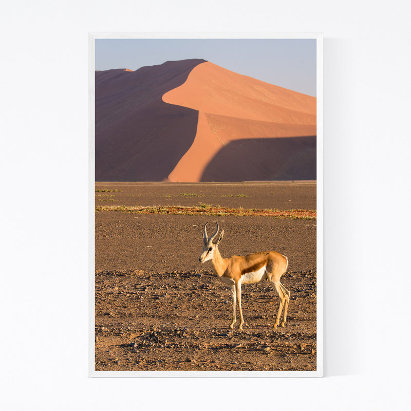 Namibia Springbok Animal Framed Art Print